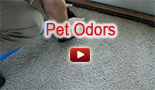 pet odors carpet cleaning company